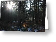 Cannock Chase Greeting Card