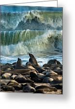 Cape Fur Seals Arctocephalus Pusillus Greeting Card