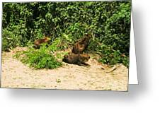 Capybara Greeting Card