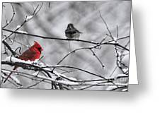 Cardinal In Winter Greeting Card