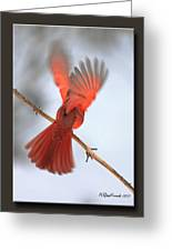 Cardinal Launch Greeting Card