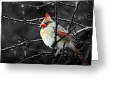 Cardinal On A Rainy Day Greeting Card