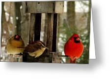 Cardinals And Carolina Wren Greeting Card