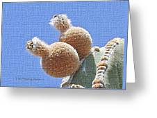 Cardon Cactus Fruit Greeting Card