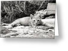Cat And Lavender  Greeting Card