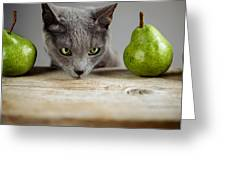 Cat And Pears Greeting Card