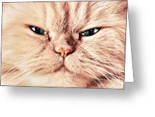 Cat Face Close Up Portrait Greeting Card