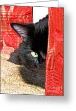 Cat Hiding Behind Drapes Greeting Card