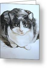Cat In Black And White  Greeting Card