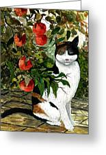 Cat On The Patio Greeting Card
