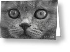 Cat's Eyes Greeting Card