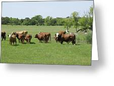 Cattle Grazing Greeting Card