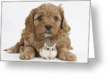 Cavapoo Puppy And Roborovski Hamster Greeting Card