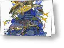Cayman Turtles Greeting Card