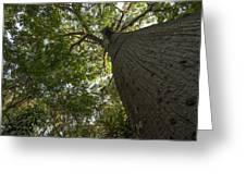 Ceiba Tree Greeting Card