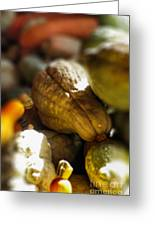 Celebration Of The Coming Of Fall Greeting Card