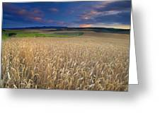 Cereal Fields At Sunset Greeting Card