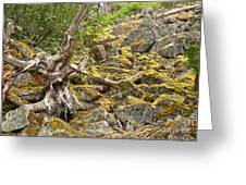 Cheakamus Rainforest Debris Greeting Card