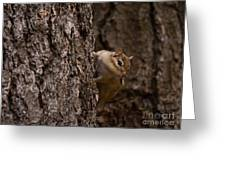 Cheeky Chipmunk Greeting Card