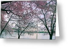 Cherry Blossom Trees Greeting Card