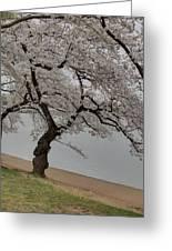 Cherry Blossoms - Washington Dc - 011343 Greeting Card