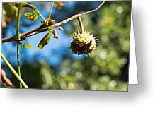 Chestnut On The Tree Greeting Card