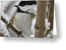 Chickadee 108 Greeting Card