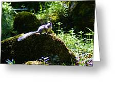 Chipmunk In The Sun Greeting Card
