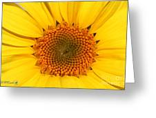Chipmunk's Peredovik Sunflower Greeting Card
