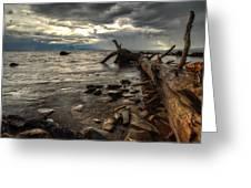 Chippewa  Greeting Card by Jakub Sisak