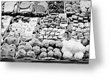 chocolates on display inside the la boqueria market in Barcelona Catalonia Spain Greeting Card