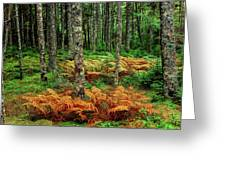 Cinnamon Ferns And Red Spruce Trees Greeting Card