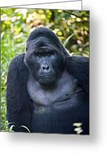 Close-up Of A Mountain Gorilla Gorilla Greeting Card