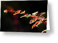 Close Up Of Berberis  Quebec, Canada Greeting Card