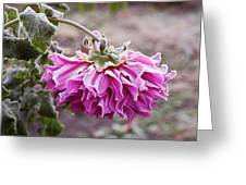 Close-up Of Flowers Covered By Frost Greeting Card