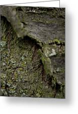 Closeup Of Bark Covered In Lichen Greeting Card