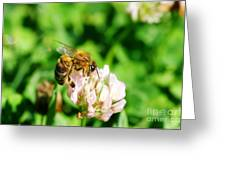 Clover Bee Greeting Card