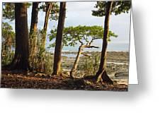 Coastal Rainforest Havelock Isl India Greeting Card