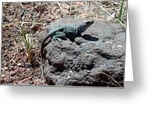 Collared Lizard Greeting Card