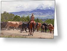 Colorado Cowboy Cattle Drive Greeting Card