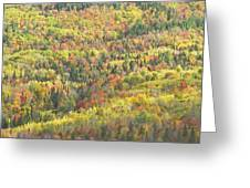 Colorful Autumn Forest In Mount Blue State Park Weld Maine Greeting Card