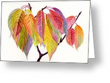 Colorful Fall Leaves Greeting Card by Sharon Freeman