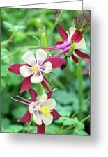 Columbine Flowers, Usa Greeting Card