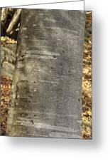 Common Beech (fagus Sylvatica) Greeting Card