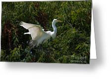 Common Egret Greeting Card