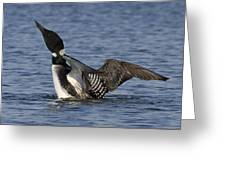 Common Loon 133 Greeting Card