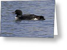 Common Loon 21 Greeting Card