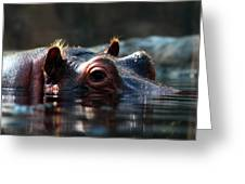Content Hippo Greeting Card