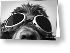 Cool Dog Greeting Card