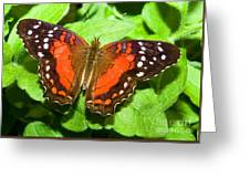 Coolie Butterfly Greeting Card